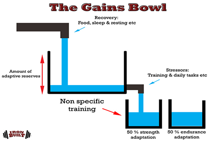 muscle and strength programming concurrent training