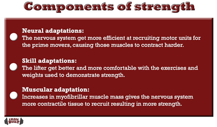 muscle and strength programming components of strength