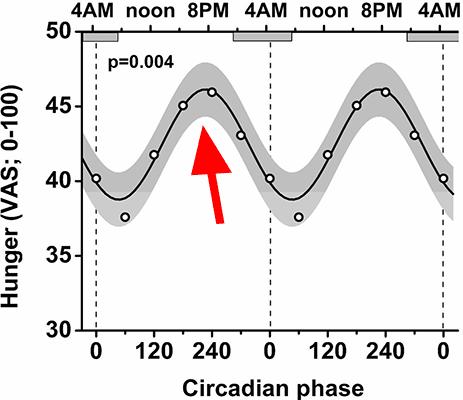 circadian rythm hunger