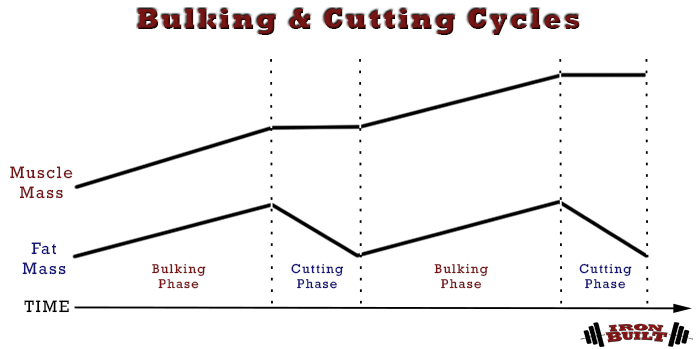 bulking and cutting cycles