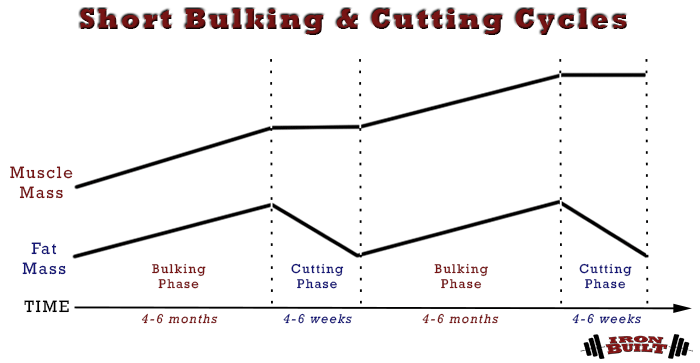short bulking and cutting cycles