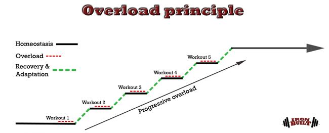 Progressive-overload-curve