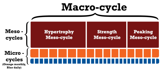 macro cycle, meso cycle, micro cycle