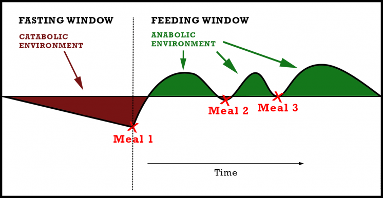 intermittent-fasting-Feeding-window-catabolic-anabolic