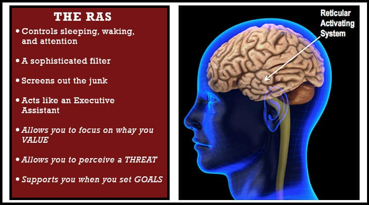 RAS-the-reticular-activating-system