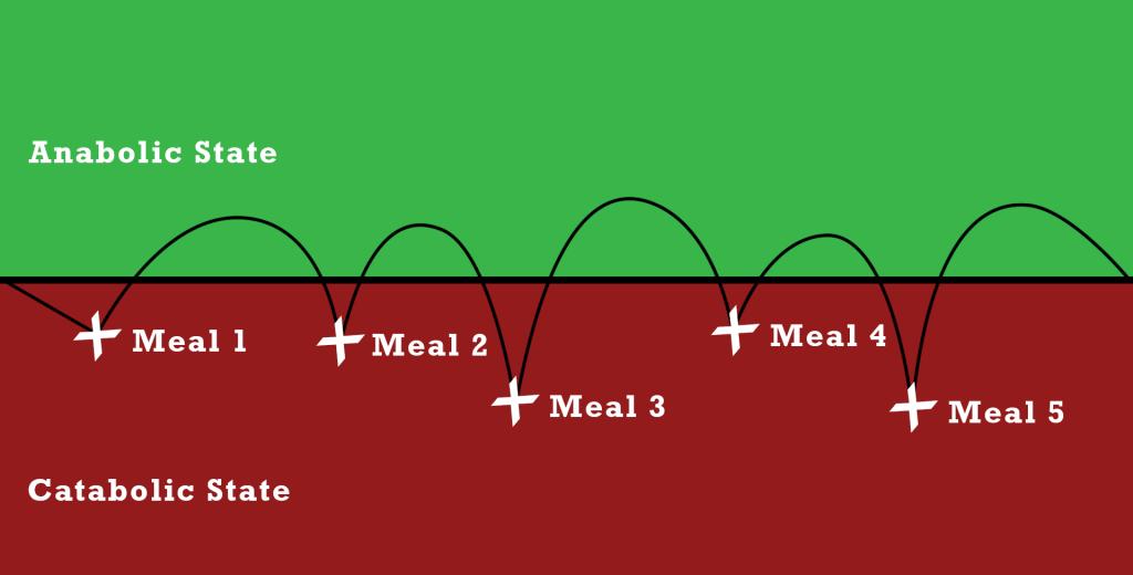 anabolic-and-catabolic-state