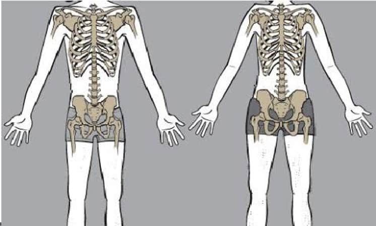 skinny-fat-genetics skeleton