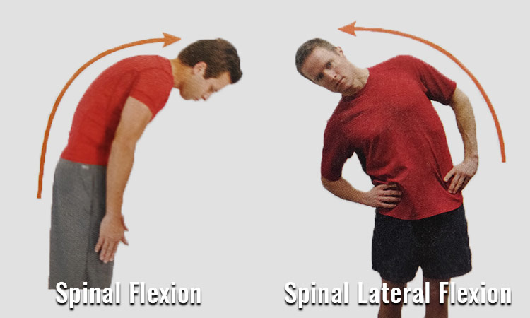 spinal-flexion-and-spinal-lateral-flexion-abs